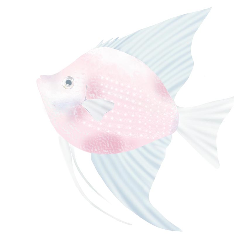 Smoky Angel Fish TN
